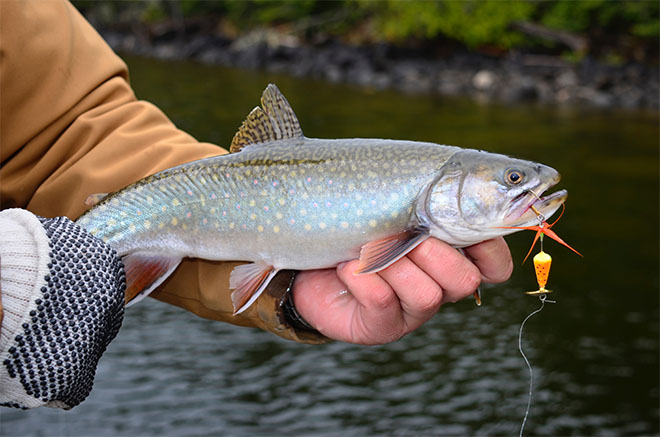Stream trout lures for Best bait for trout fishing