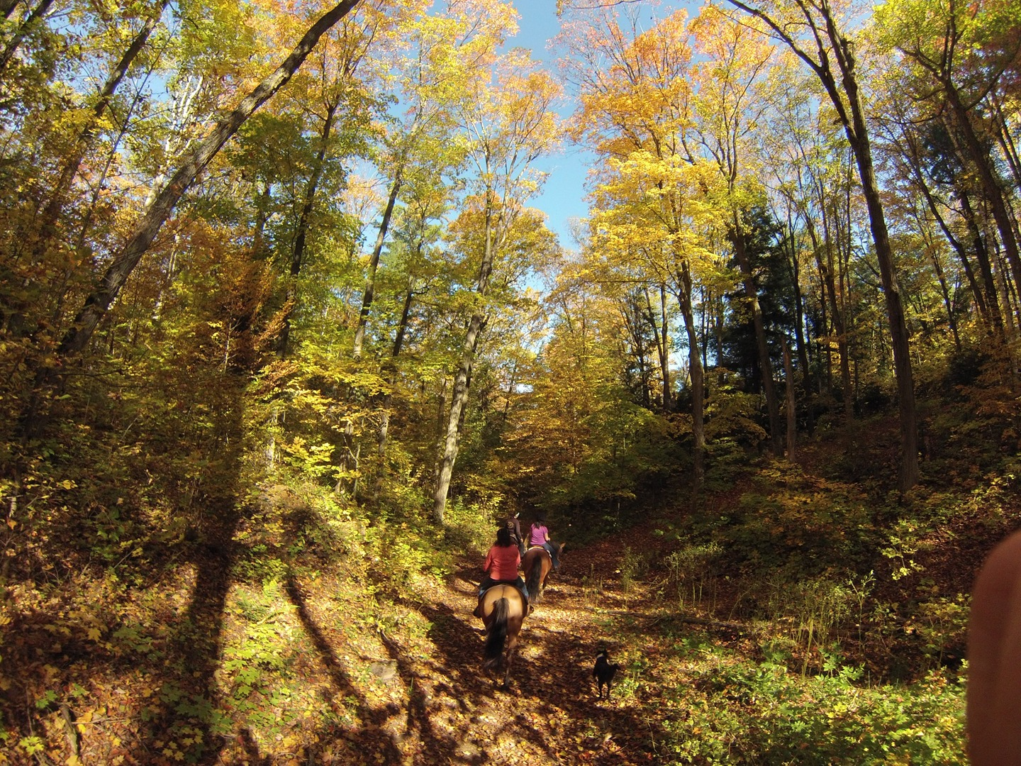 4 Amazing Ways To Experience Fall In Northeastern Ontario
