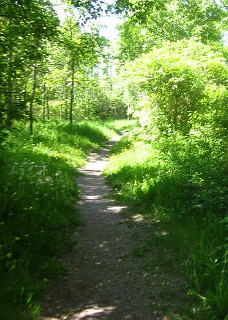 Nipigon Trail path