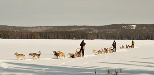 3-Dog-Teams-on-Caribou-Lake-Borealis-Sled-Dog-Adventures