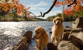 Top Pet Friendly Vacation Spots In Ontario Northern