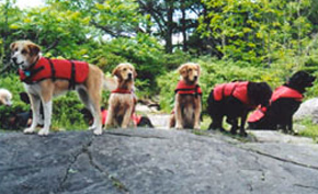 Dog-Paddling-Adventures---lifejackets