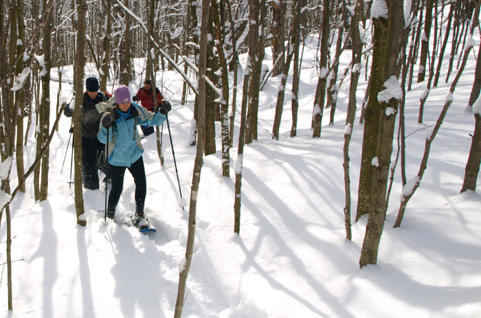 Snowshoeing-off-the-beaten-track-in-woods-Treks-in-the-Wild