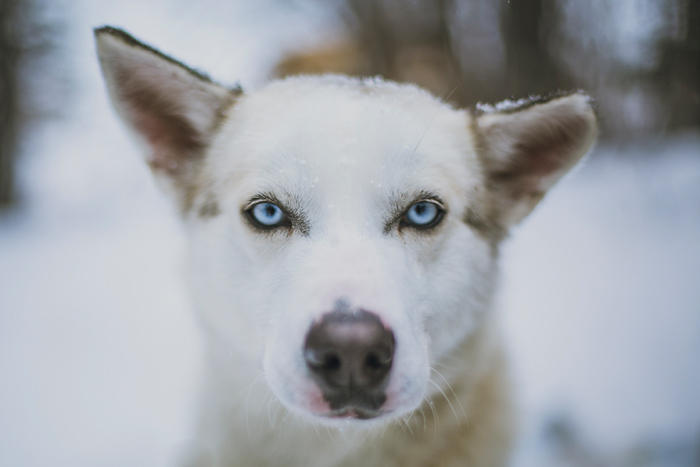 A Must Do Adventure Dog Sledding In Ontario Northern