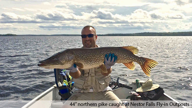 "44"" northern pike caught at Nestor Falls Fly-in Outposts"