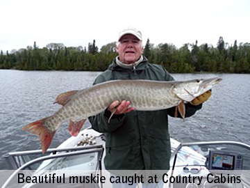 Muskie fishing on Big Vermilion Lake