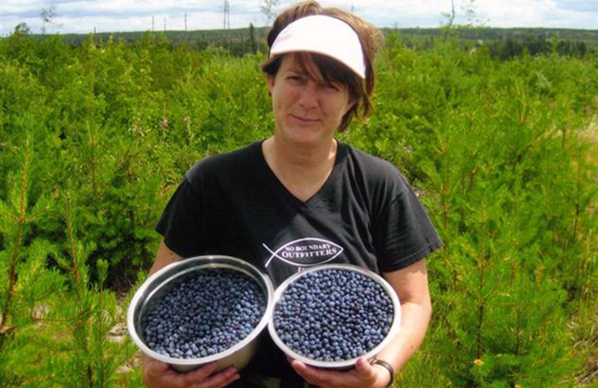 Wild blueberries like these at Timber Wolf Lodge can be picked in July