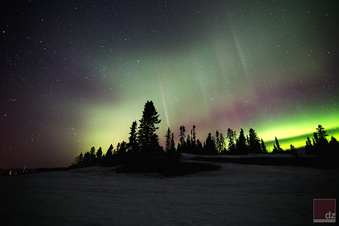 Silhouettes of trees in front of the Northern Lights by DZ Photography