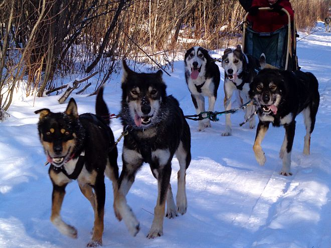 Leahy running dogs boreal