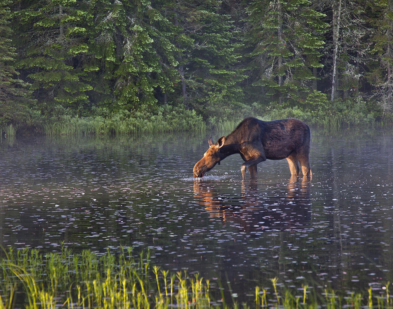 Wildlife Photography Canoe Trip In Algonquin Park Northern Ontario