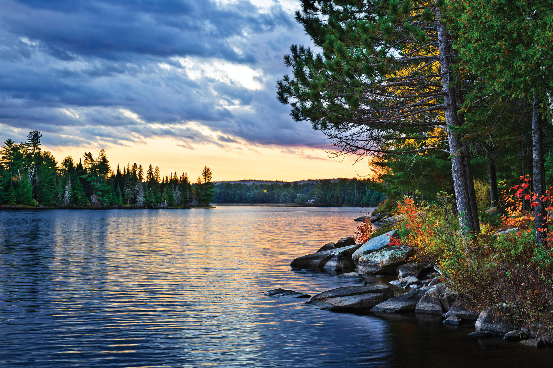 A Fine Pine Is Like A Fine Wine Northern Ontario Travel