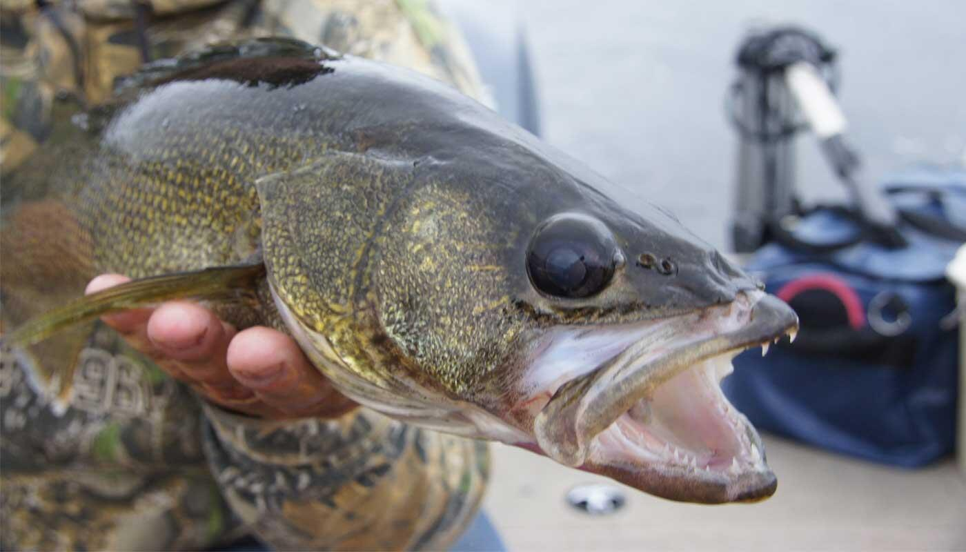 Wind, Cloud and Walleye: Why It's Important to Understand