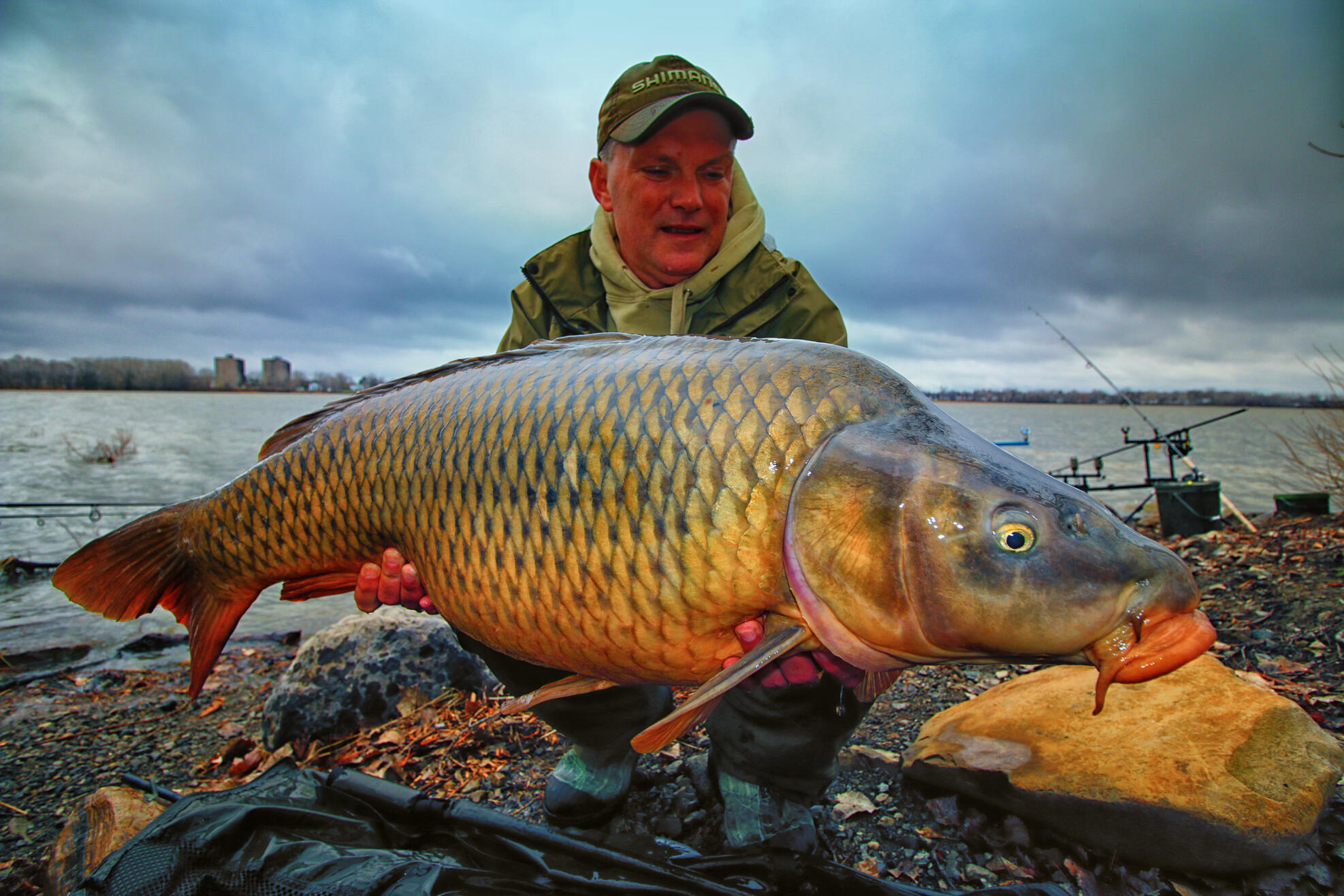 World class carp fishing in ontario with len perdic and for Carp fish pictures