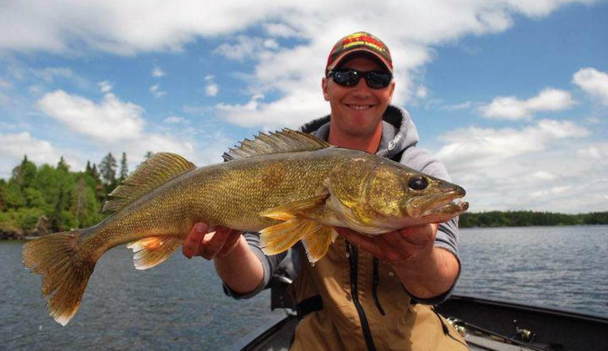 Pro anglers use this bait to catch lots of walleye for Walleye fishing in canada