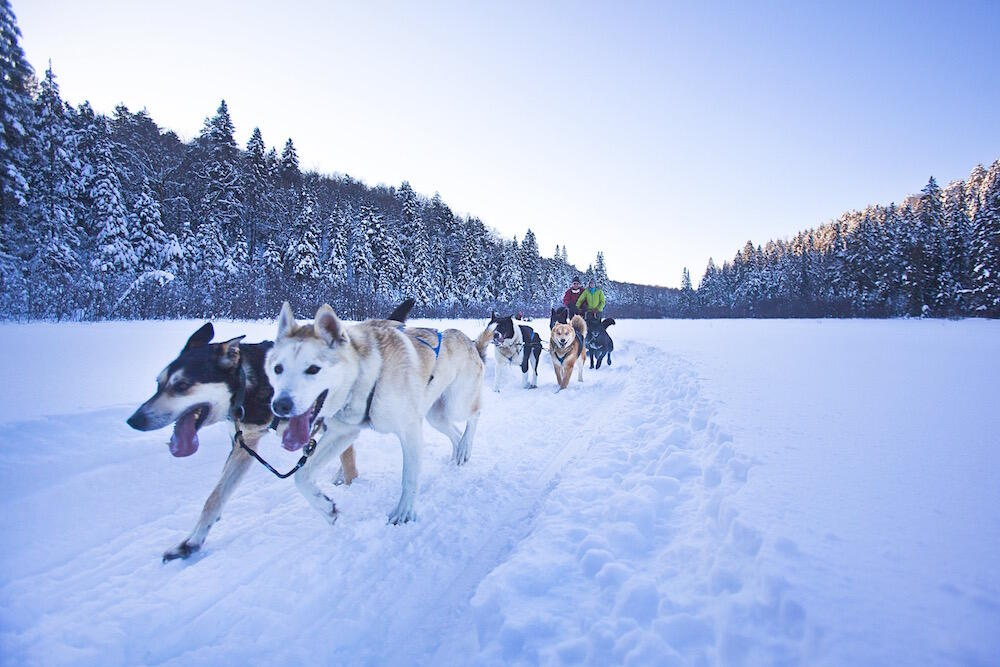 Two people standing on a dog sled behind a team of dogs.