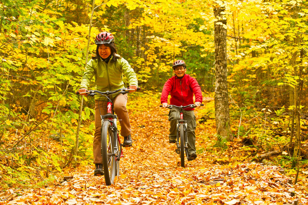 Two people riding bicycles on a colourful forest trail.
