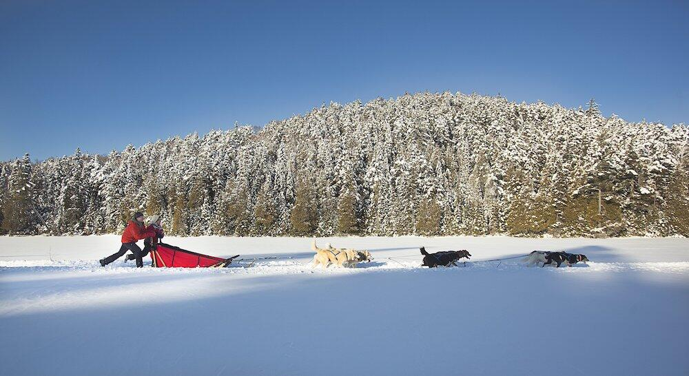Dogsledding on a lake with snowy trees in background.