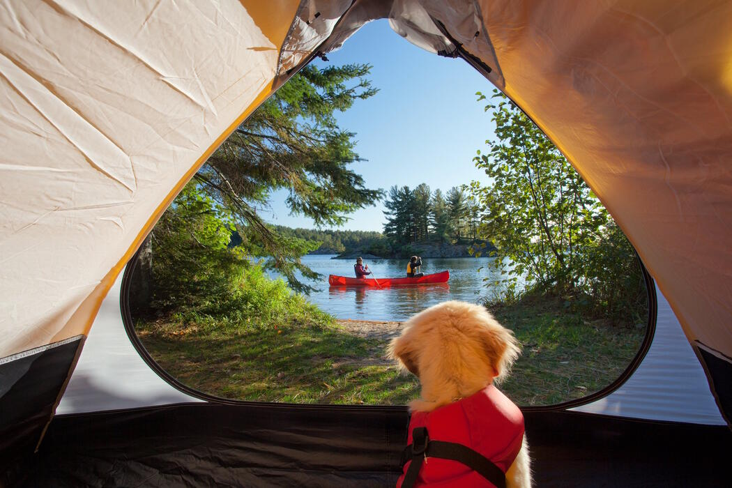A pup in a life jacket sitting in a tent looking out as a canoe paddles by.