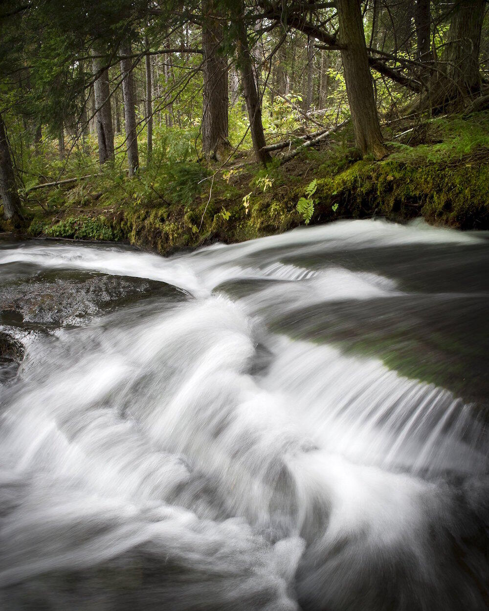 Flowing water over a small waterfall in forest