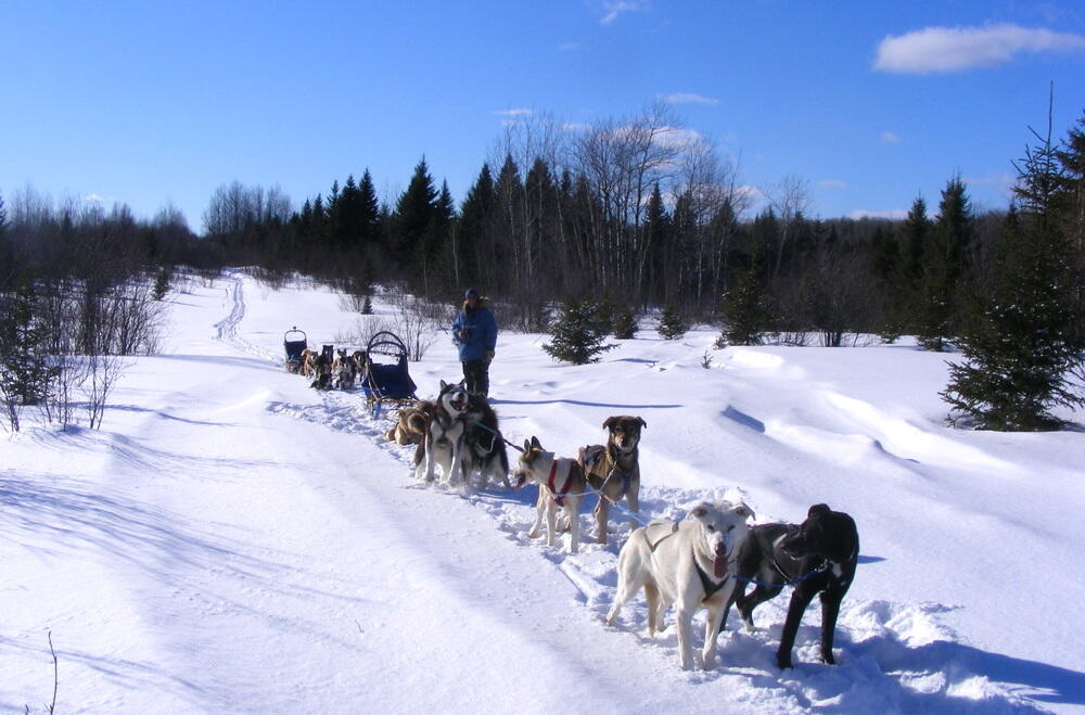 Dog sled team on a snow covered trail.