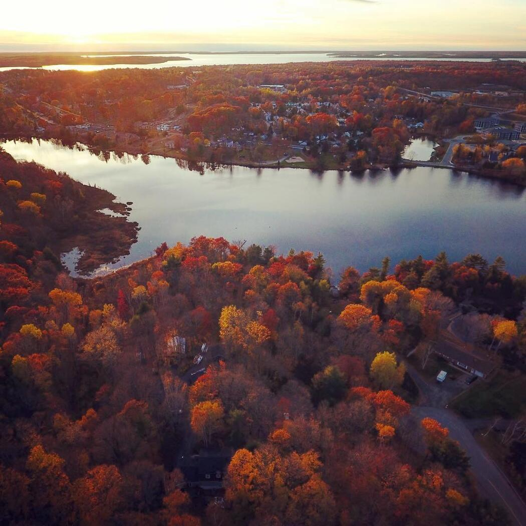 Aerial view in autumn of coloured foliage and river.
