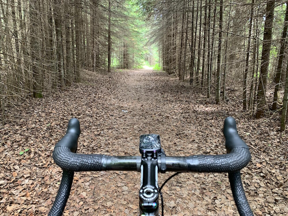 Handle bars of a bike and view of long pathway lined with tall trees.