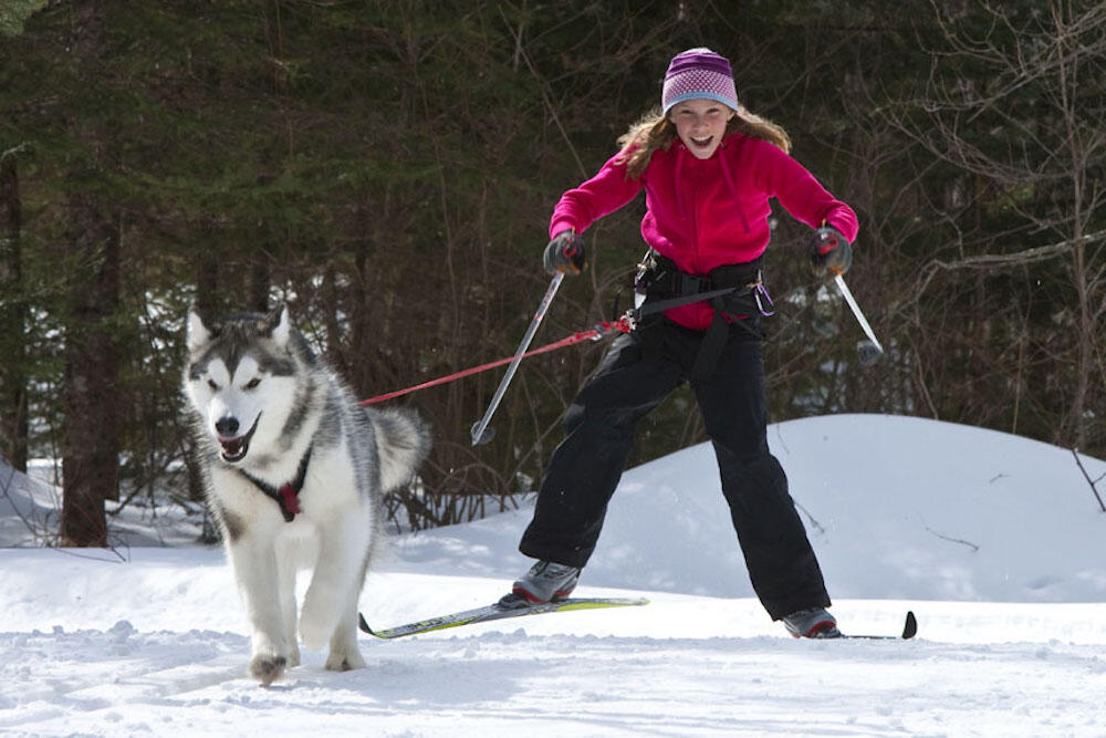 Young girl skijoring with a husky.