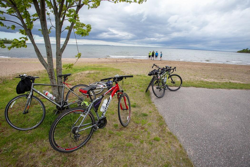 Bicycles parked by a tree with long beach and water in background