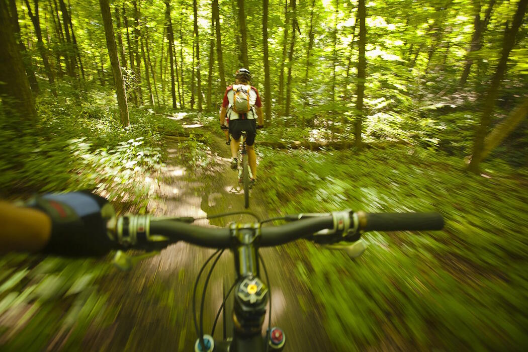 two mountain bikers riding on a forest trail.