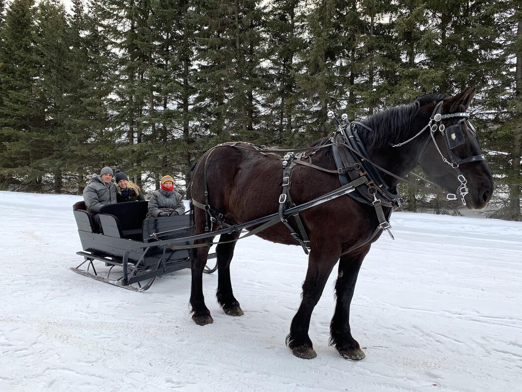 Horse hooked up to a cutter sleigh with a driver and a young couple in sleigh.