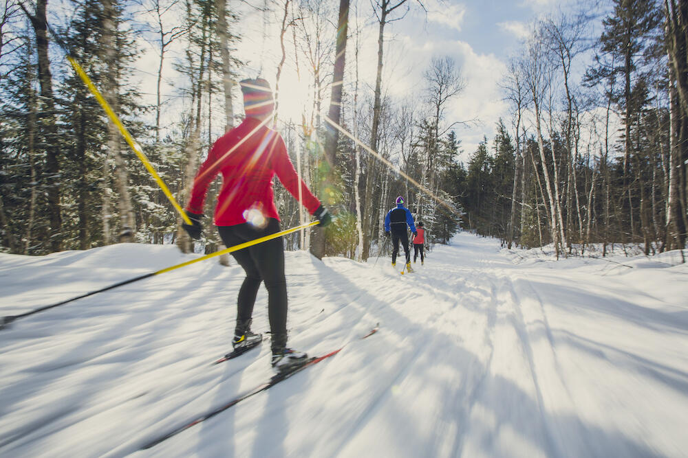 Cross country skiers on a trail in forest on a sunny day