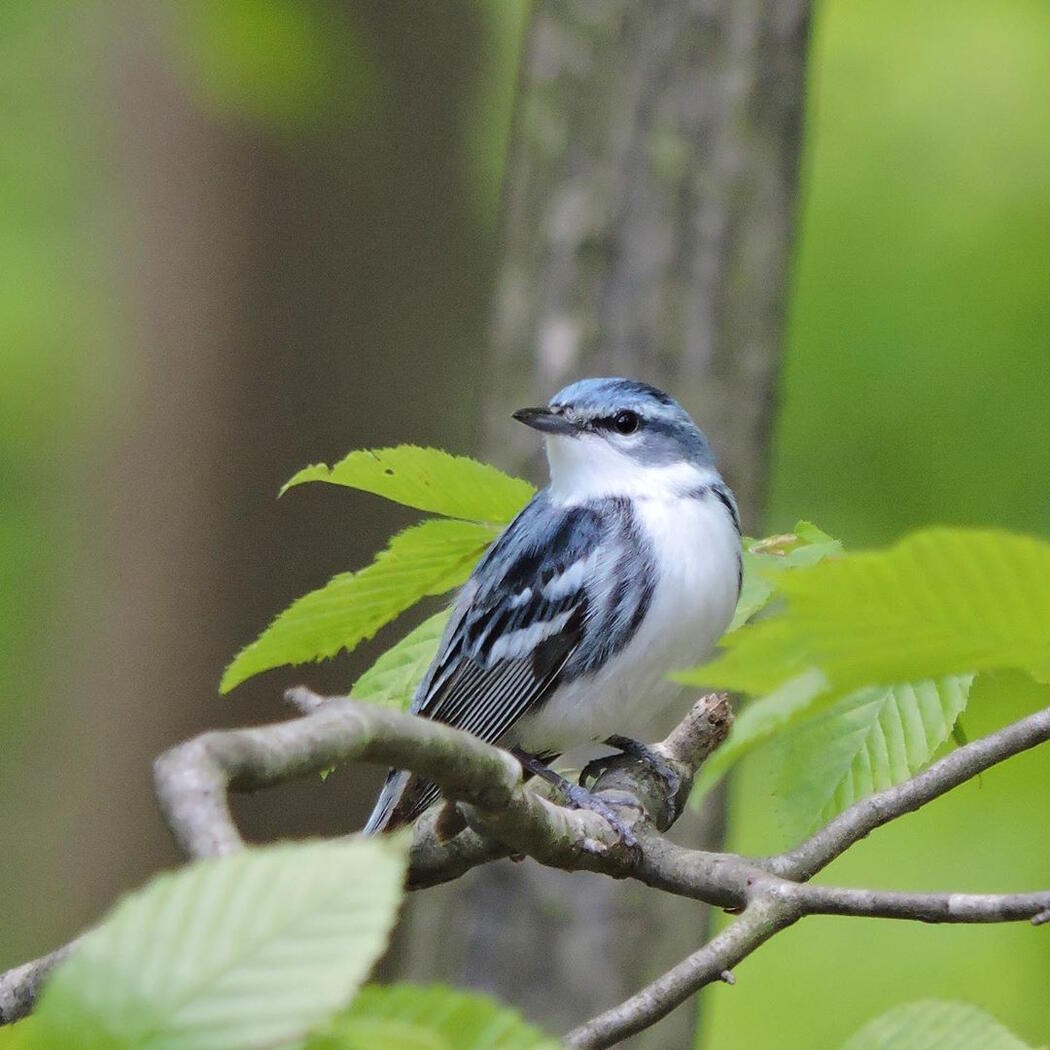 Close up image of a beautiful bird sitting on a tree branch.