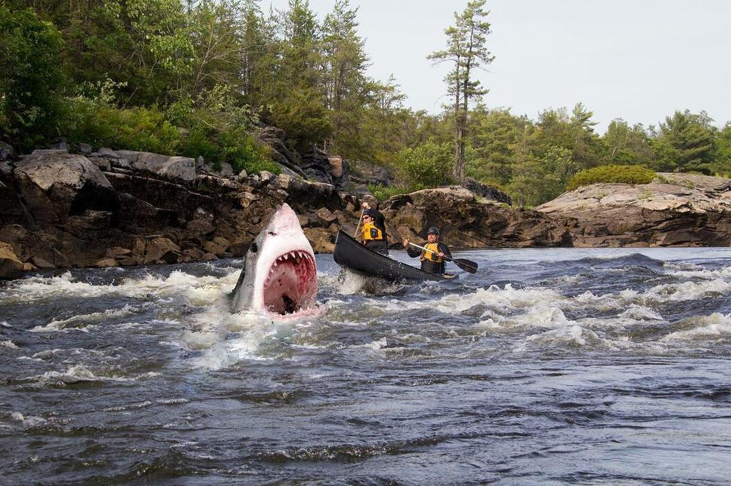 People in a canoe in whitewater, large shark with open mouth in front of canoe.