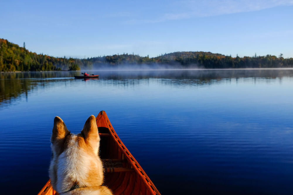 Dog sitting in front of a canoe looking at a kayaker in distance on calm lake