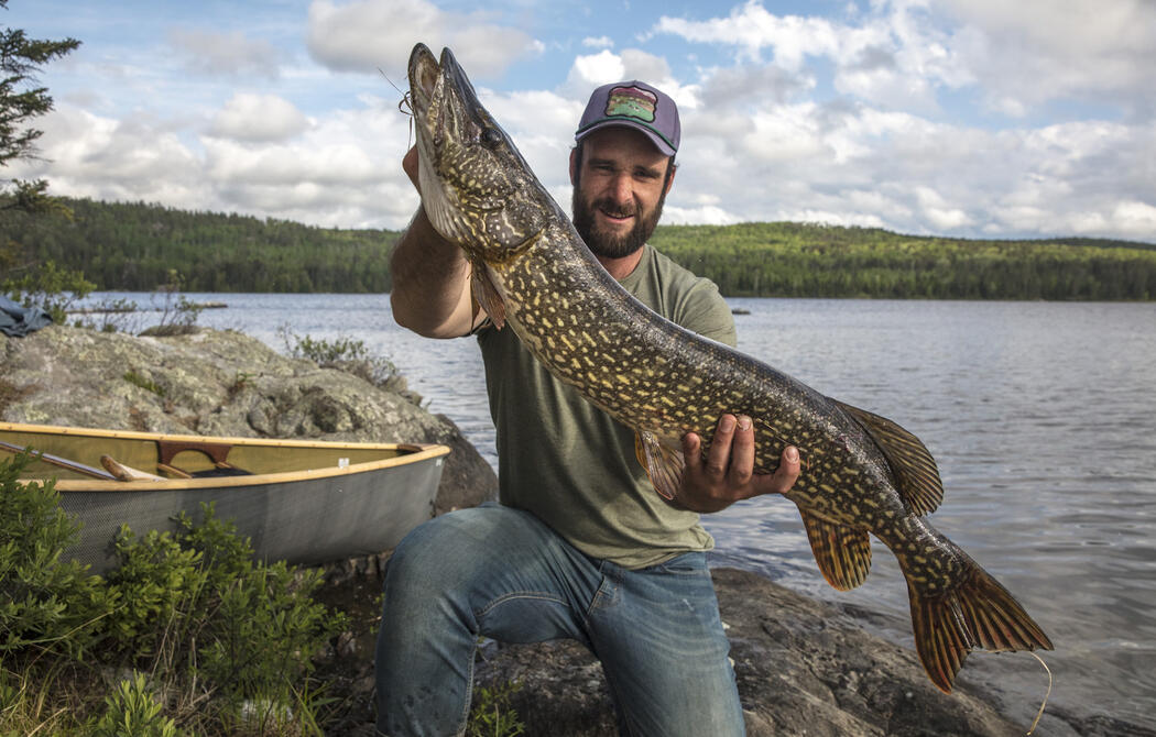 Man standing beside a canoe and lake holding a huge pike.