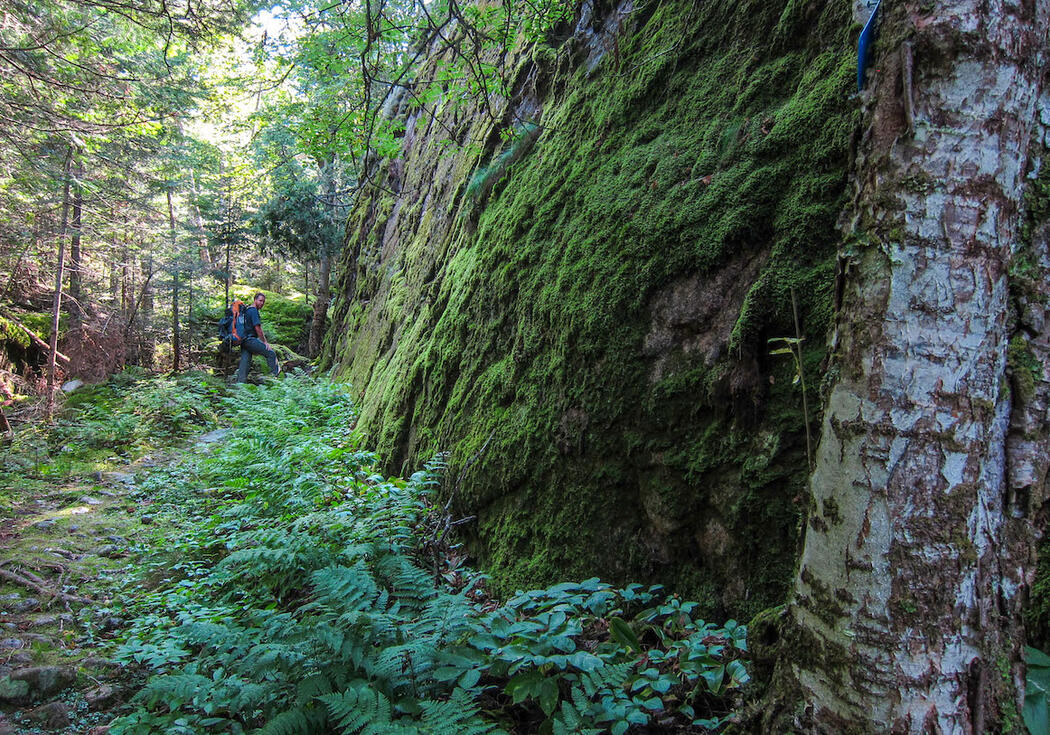 Hiker on a narrow trail in green forest