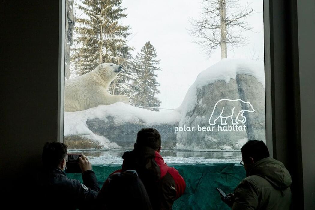 Kids looking through glass at a polar bear.