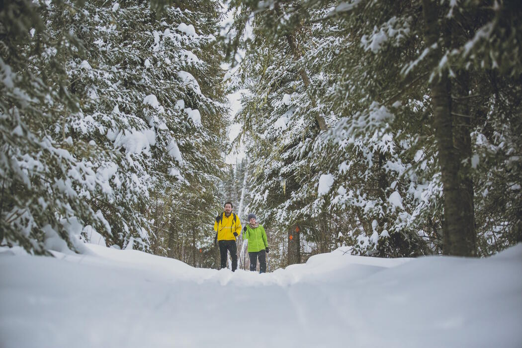 Two people cross-country skiing in a snow-covered forest.