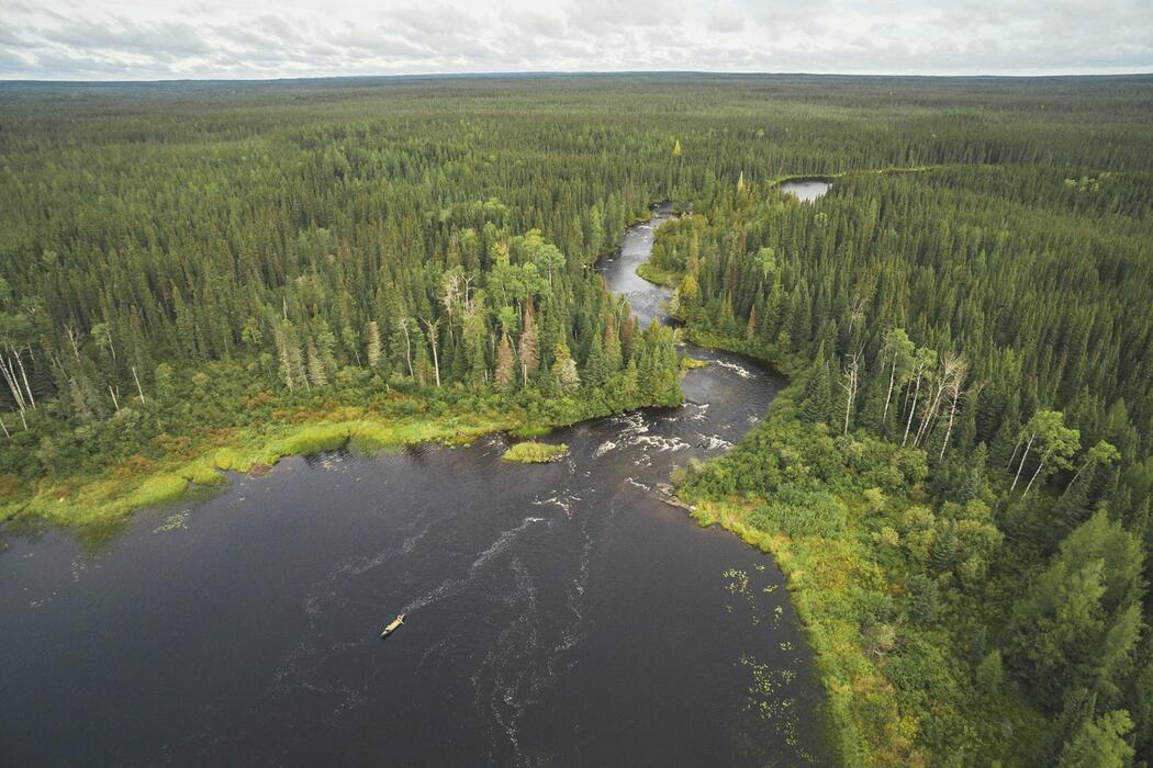 Areal view of the boreal forest and a lake.