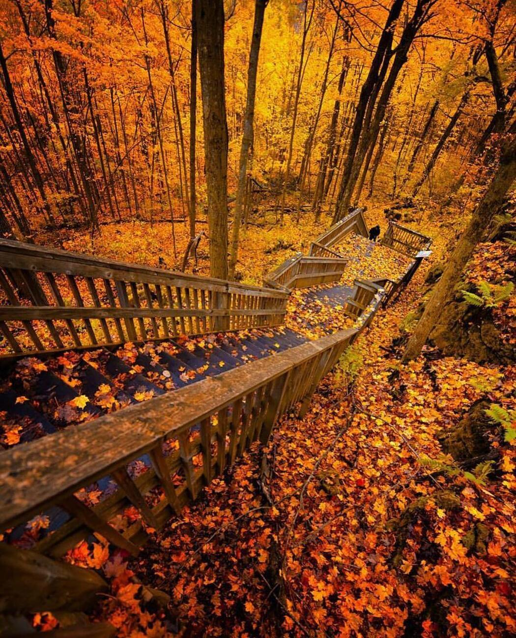 Wooden stairway down to a platform in a colourful autumn forest.