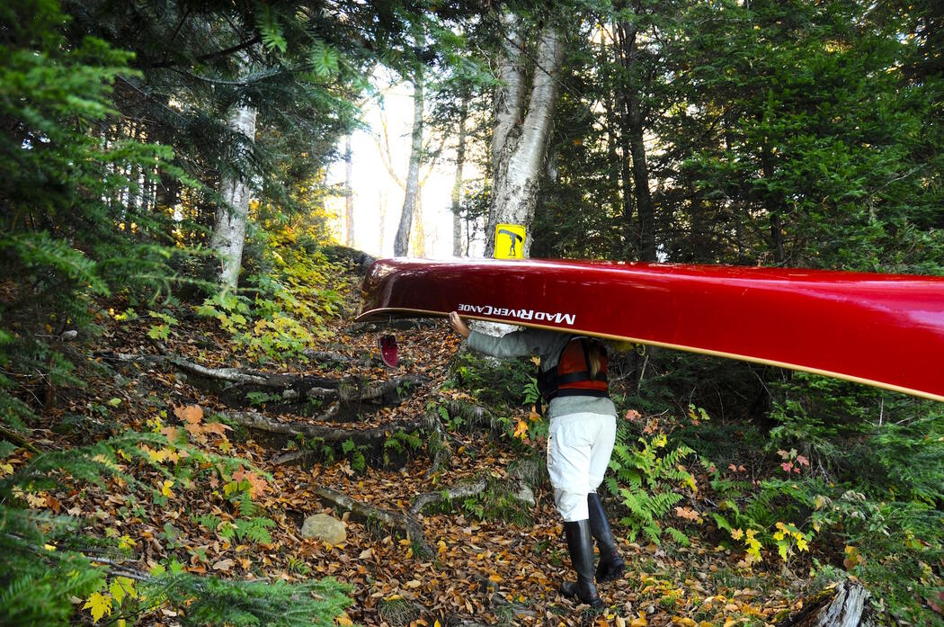 Person portaging a red canoe on a woodland trail.