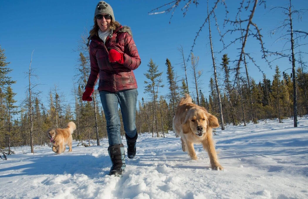Woman running on snow trail with two golden retrievers.
