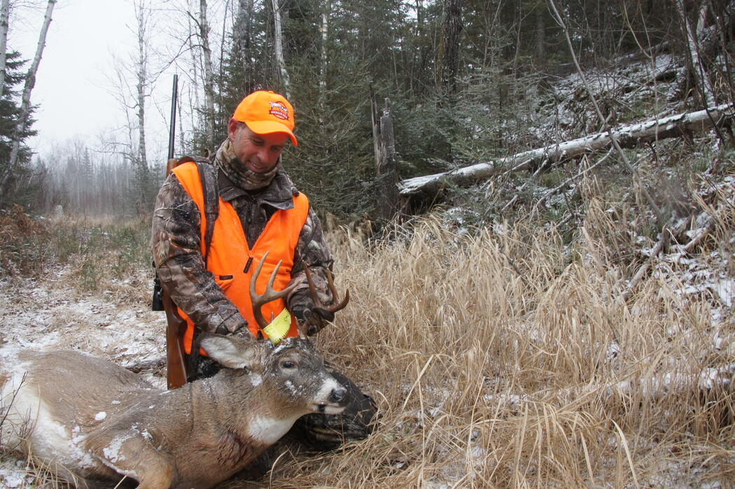 harvested white tailed deer