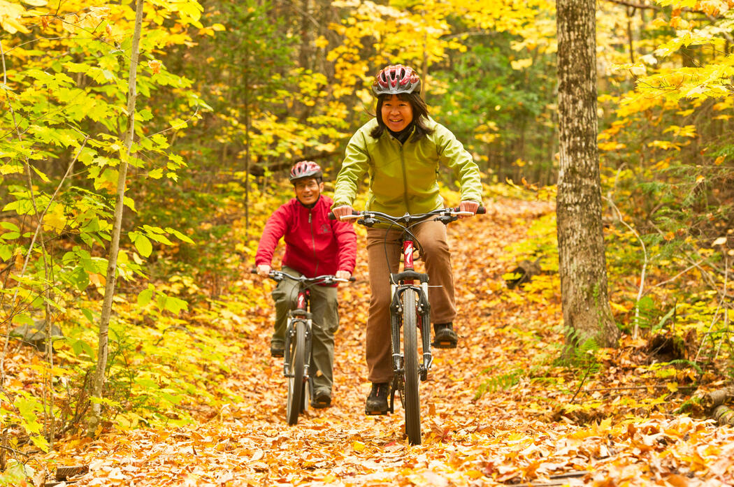 Woman and man riding mountain bikes on a wide trail surrounded by bright yellow autumn colours.