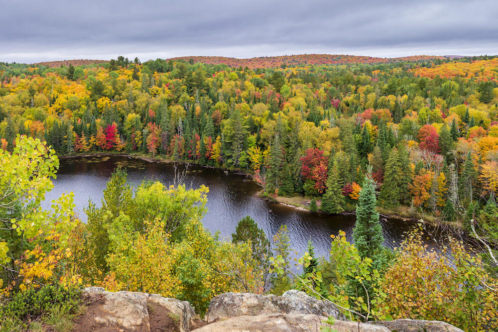 Overlooking river with brightly coloured leaves on trees in background