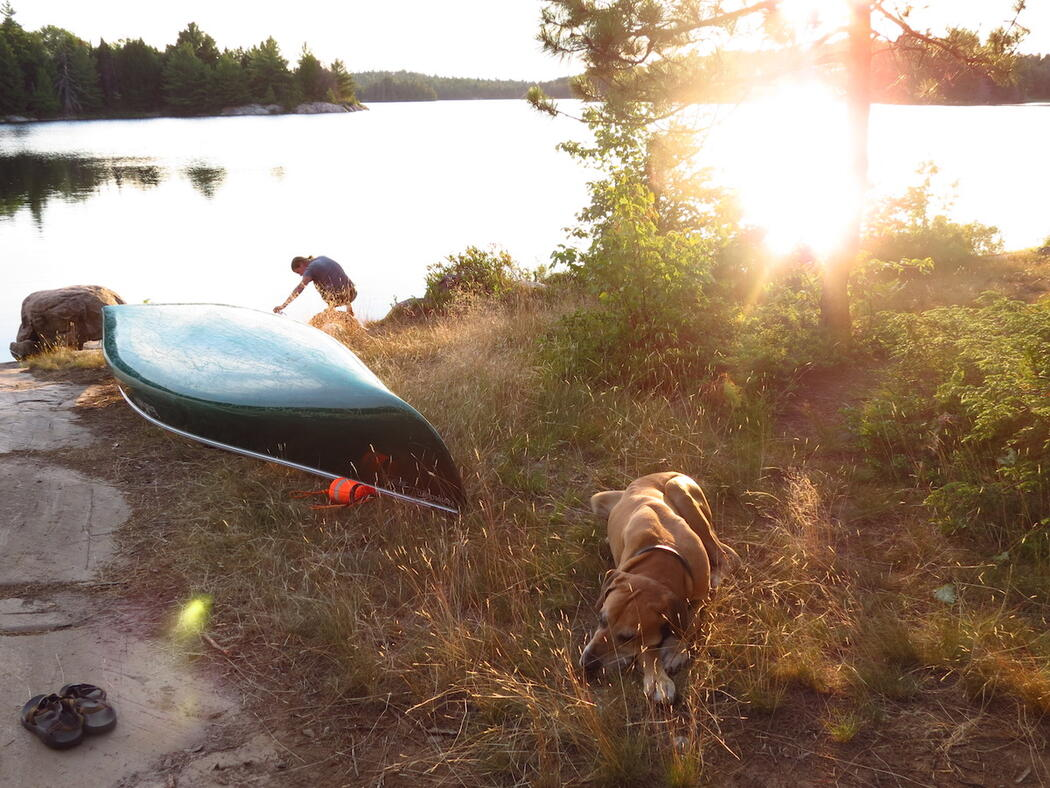 Dog resting beside canoe during early evening.