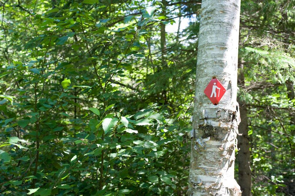 Red trail marker on a birch tree.
