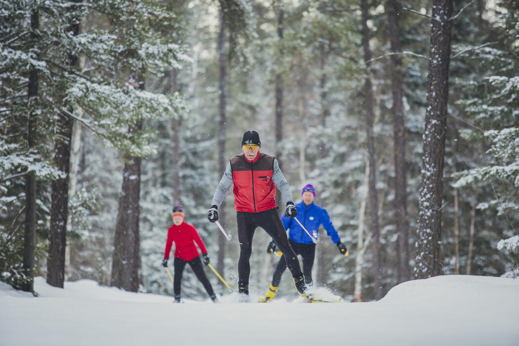 Three people cross-country skiing in snowy forest