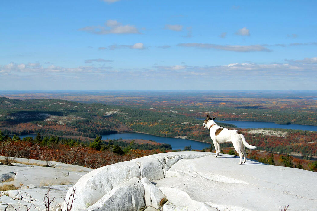 Dog standing on white rock of Silver Peak looking a view.