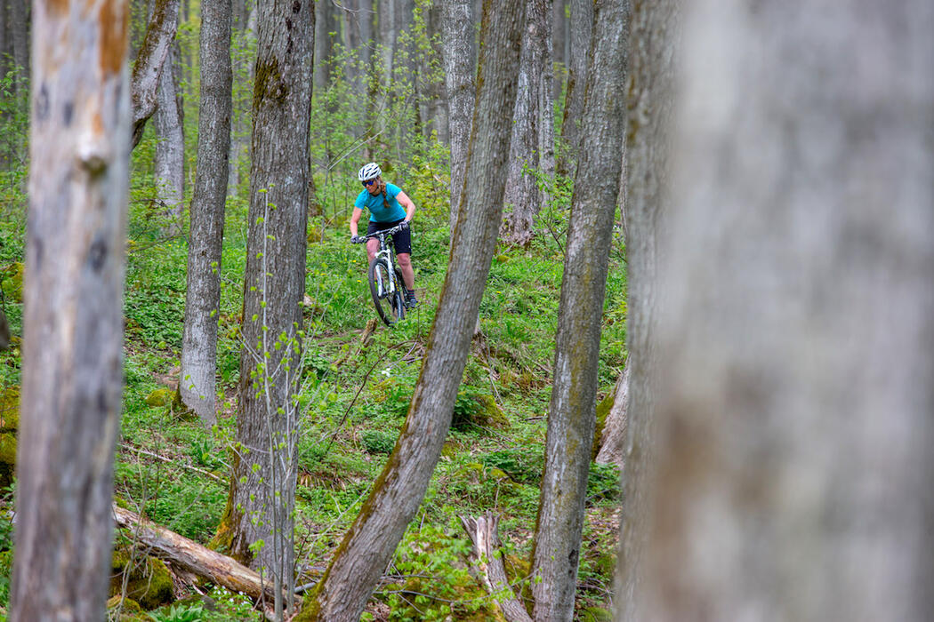 Mountain biker riding in a forest.